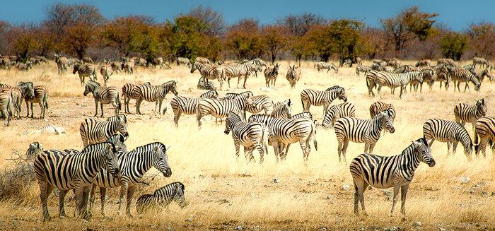 Namibia und Südafrika: Sonderzugreise mit dem African Explorer