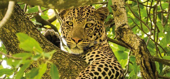Tansanias Tierparadiese: Komfort-Safari in kleiner Gruppe