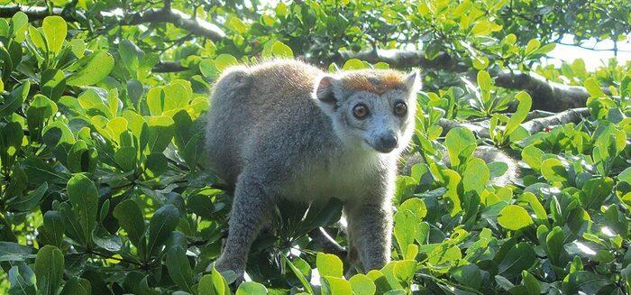 Madagaskar – Insel der Lemuren und Baobabs
